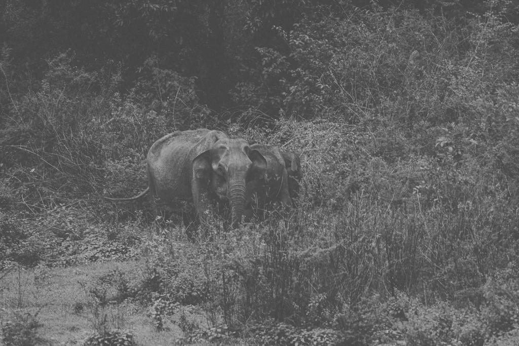Sri-Lanka-Yala-National-Park-Elephant-Wildlife-Safari-Jeep-Roadtrip-IMG_3017