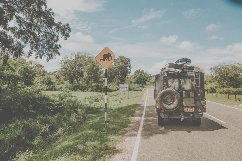 Sri-Lanka-Yala-National-Park-Elephant-Wildlife-Safari-Jeep-Roadtrip-IMG_6186