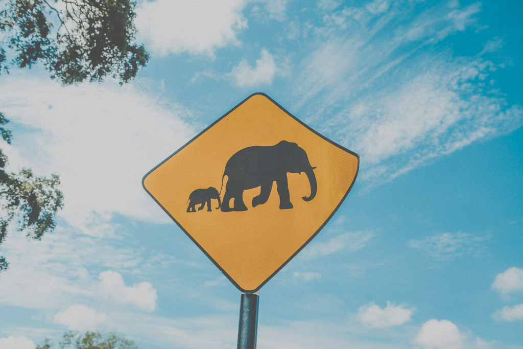 Sri-Lanka-Yala-National-Park-Elephant-Wildlife-Safari-Jeep-Roadtrip-IMG_6187