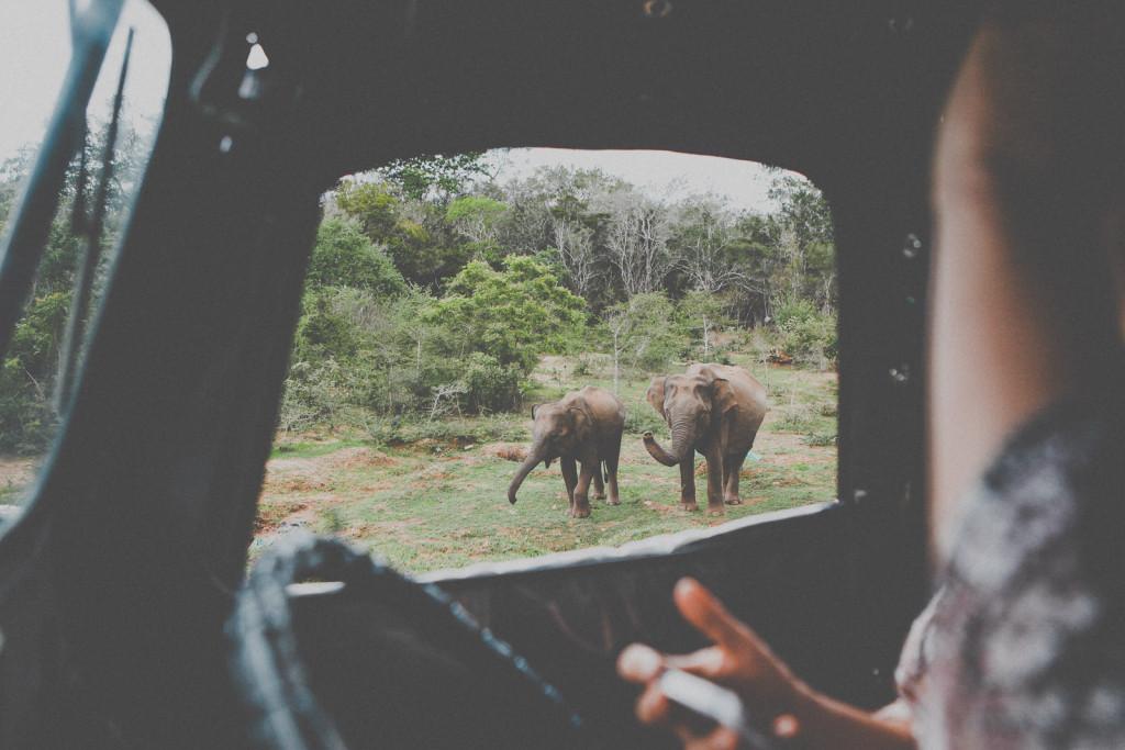 Sri-Lanka-Yala-National-Park-Elephant-Wildlife-Safari-Jeep-Roadtrip-IMG_6256